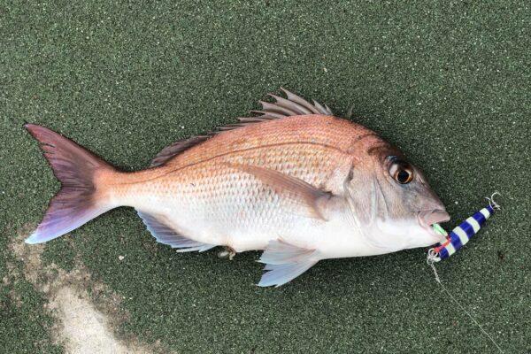 真鯛 ジグパラ ショート